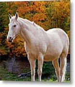 White Horse In Autumn Metal Print
