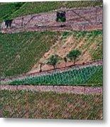 Wine Of Rhine Metal Print