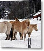 40104-5 Norwegian Horses Metal Print