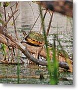 42- Florida Red-bellied Turtle Metal Print