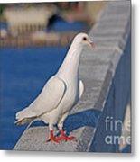 21- White Dove Metal Print