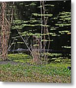 44- Alligator - Great Blue Heron Metal Print