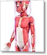 Human Muscular System Metal Print