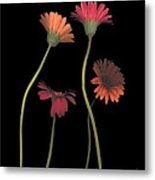 4daisies On Stems Metal Print