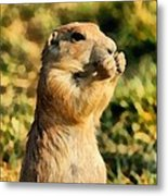 Black-tailed Prairie Dog Metal Print
