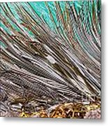 Bull Kelp Blades On Surface Background Texture Metal Print by Stephan Pietzko