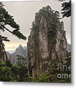 Chinese White Pine On Mt. Huangshan Metal Print