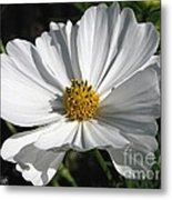 Cosmos Named Sensation Alba Metal Print