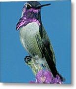 Costas Hummingbird Metal Print