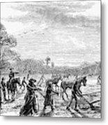 Cotton Plantation, 1867 Metal Print