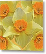 5 Daffy's On Parade Metal Print