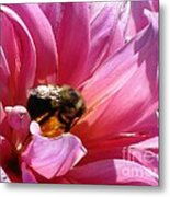 Dahlia Named Lucky Number Metal Print