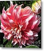 Dahlia Named Myrtle's Brandy Metal Print