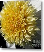 Dahlia Named Platinum Blonde Metal Print