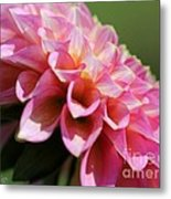 Dahlia Named Skipley Spot Of Gold Metal Print