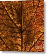 Dogwood Leaf Backlit Metal Print
