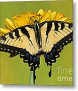 Eastern Tiger Swallowtail Butterfly Metal Print