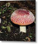 Fairy Mushrooms Metal Print