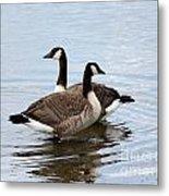 Geese Metal Print