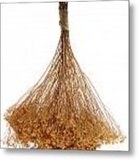 Hanging Dried Flowers Bunch Metal Print