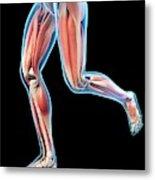 Human Leg Muscles Metal Print