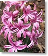 Hyacinth Named Pink Pearl Metal Print