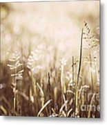 June Grass Flowering Metal Print