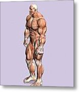 Misc. Anatomy Images Metal Print