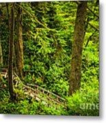 Path In Temperate Rainforest Metal Print by Elena Elisseeva