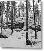 Pine Forest Winter Metal Print