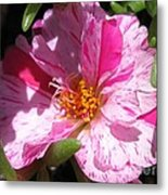 Portulaca Named Sundial Peppermint Metal Print