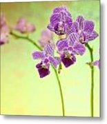 Purple Orchid-8 Metal Print