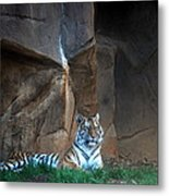 Riverbanks Zoo Columbia Sc Metal Print