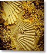 Seashell In Stone Metal Print