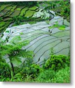 Unesco World Heritage Site, Rice Metal Print