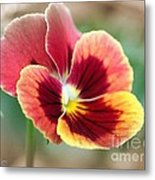 Viola Named Penny Red Blotch Metal Print