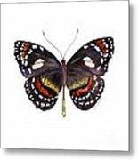 50 Elzunia Bonplandii Butterfly Metal Print