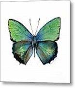 52 Arhopala Aurea Butterfly Metal Print
