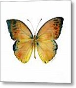 53 Leucippe Detanii Butterfly Metal Print