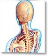 Upper Body Anatomy Metal Print