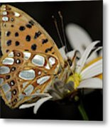 Nature And Travel Images Metal Print