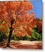 A Blanket Of Fall Colors Metal Print