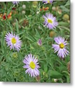 6 Asters Left Metal Print