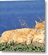 Cat In Hydra Island Metal Print