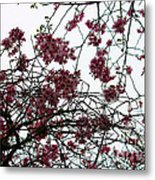 Cherry Blossoms In The Sky Metal Print