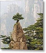 Chinese White Pine On Mt. Huangshan Metal Print