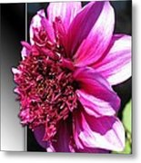 Dahlia Named Blue Bayou Metal Print