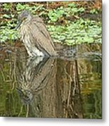 Florida Birds  Metal Print