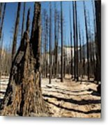 Forest Fire Metal Print