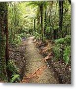 Forest Trail Metal Print